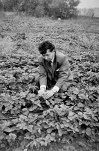 Турция. На поле земляники аграрного института. Университет  г. Бурсы, 1993 г., октябрь.