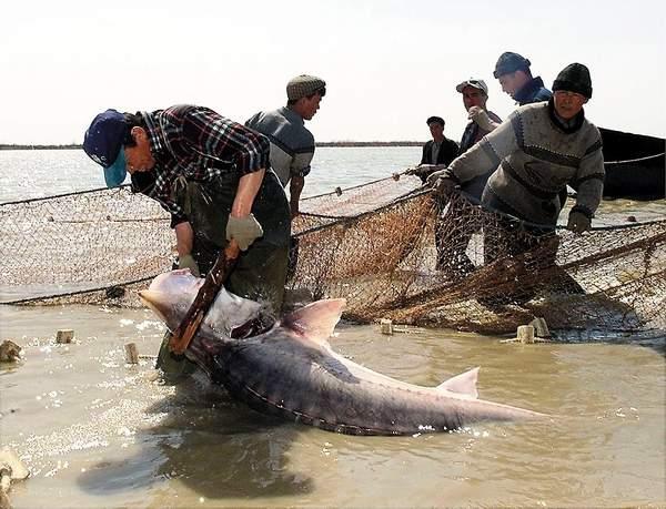 рыбалка в туркмении на каспии