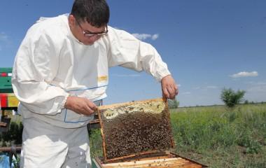 Пчелиный пастырь: 10 историй о предпринимателях Уральска