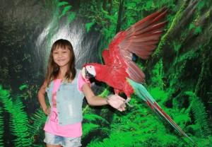Попугай Яша