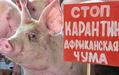 Фото: in-kolomna.ru