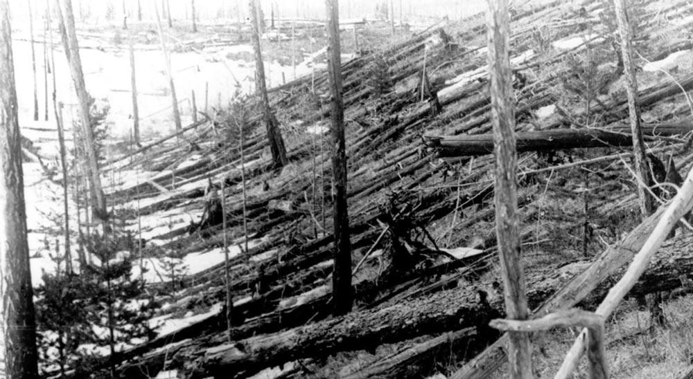 Вывал леса на месте взрыва