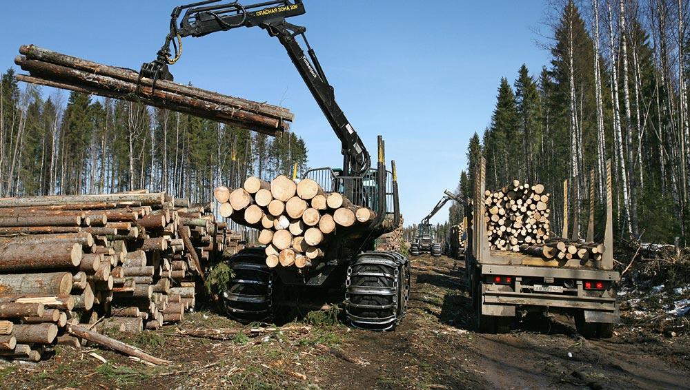 Заготовка леса в Сибири